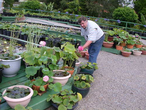 ROD WORKING AROUND AT THE NURSERY